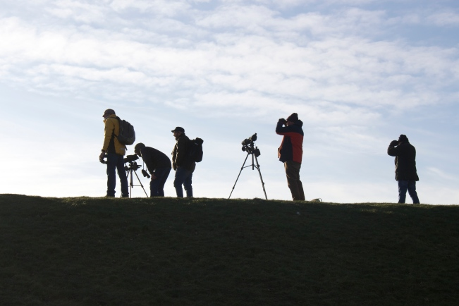 Birdwatching Expeditions around West Lothian and beyond.